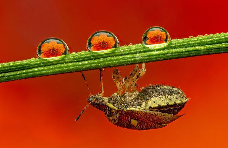 макро, макрофото, цветы, клоп, насекомые всё ближе, чем мы думаемphoto preview