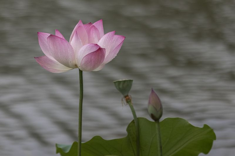 Lotusphoto preview