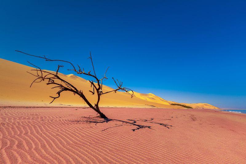 africa, safari, dunes, sand, desert, tree, landscape, africa, namibia, namib Dunes in Namib Desertphoto preview