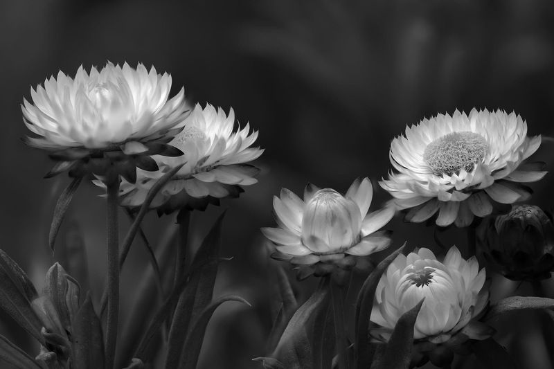 #flowers #macro photo preview