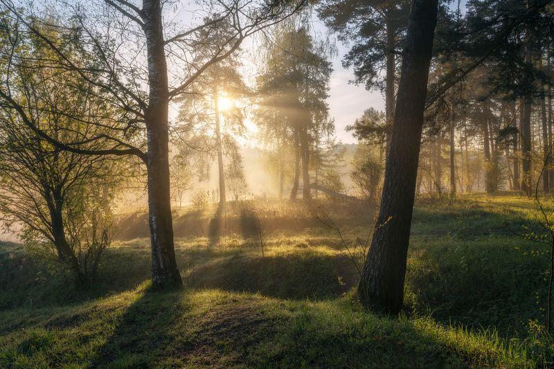 природа, пейзаж, утро, весна, рассвет, туман Утро в лесуphoto preview