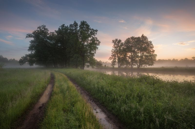 природа утро туман деревья После дождя фото превью