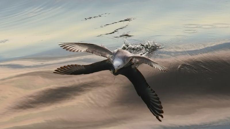 охотское море, посадка, чайка, апрельский штиль прокатиться на морском облакеphoto preview