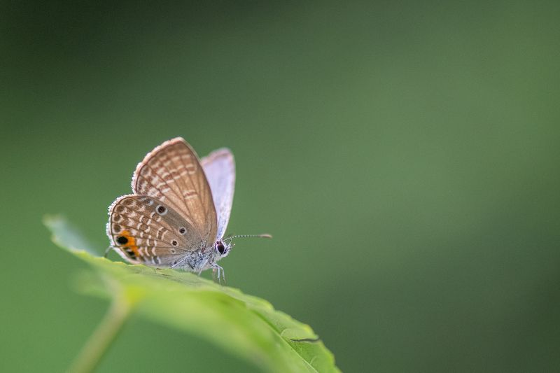 #butterfly #nature Butterflyphoto preview