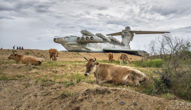 дагестан экраноплан коровы С Каспийским Монстром.photo preview