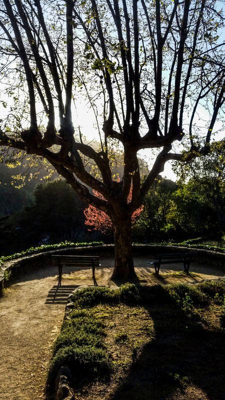 Landscapes, City, Nature SIntraphoto preview
