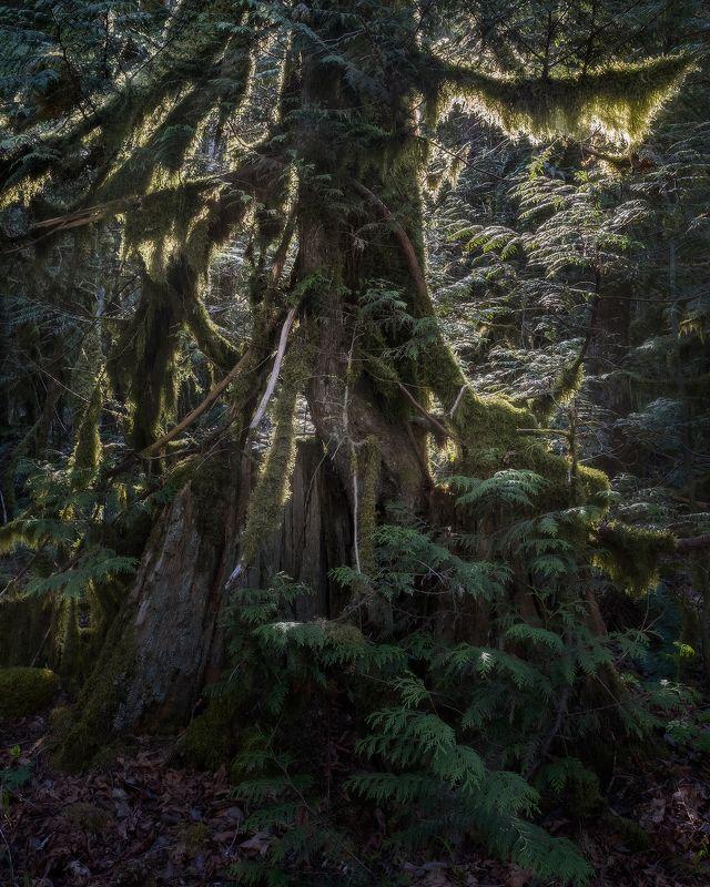 moss, old tree, мох ЖИЗНЬ ПОСЛЕ ЖИЗНИphoto preview