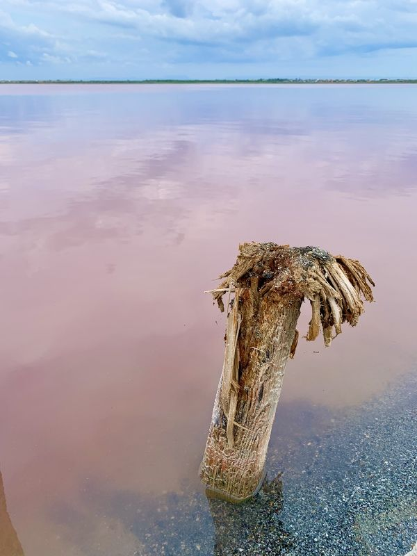 сасык-сиваш Соленое и розовоеphoto preview