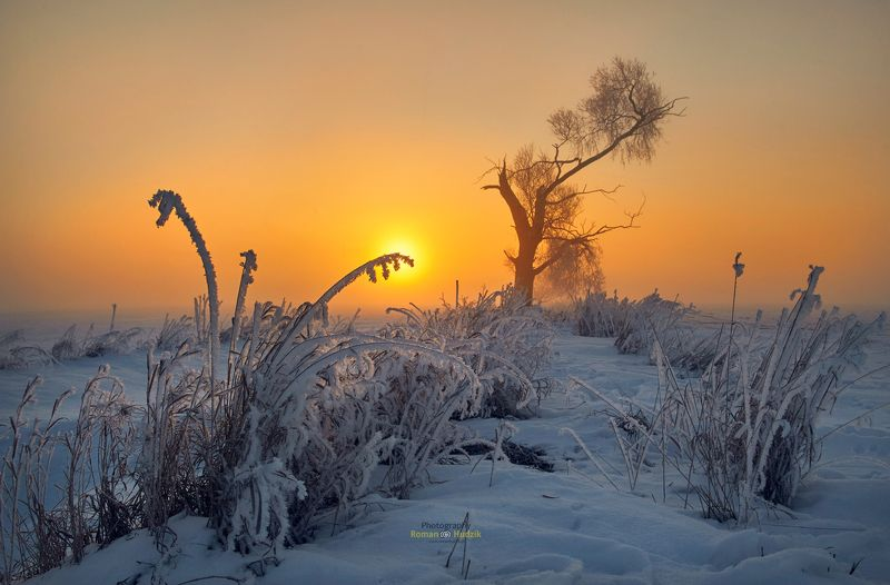 sunrise, landscape, tree, winter, fog, fields, colorful sunrise, grasses, Magical morning. фото превью