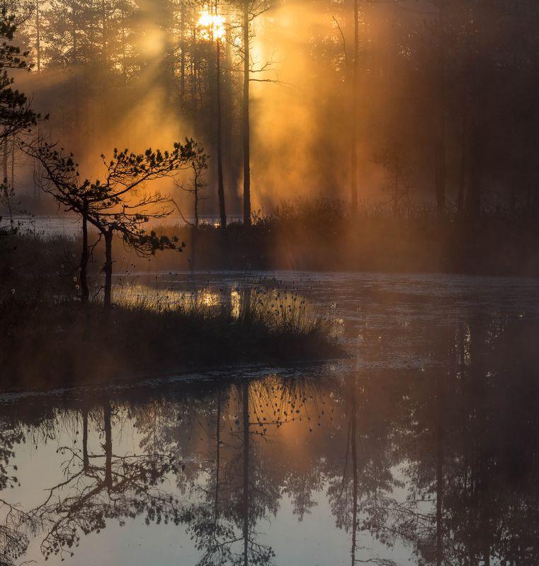 болото, кайф, рассвет ,север ,солнце, свет, закат, облака, отражение, фототур Магия рассвета на болотеphoto preview