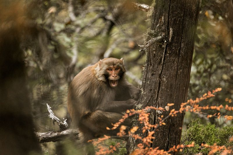 animals, wildlife, monkey, outdoor, nature, macaque Three kinds of moodphoto preview