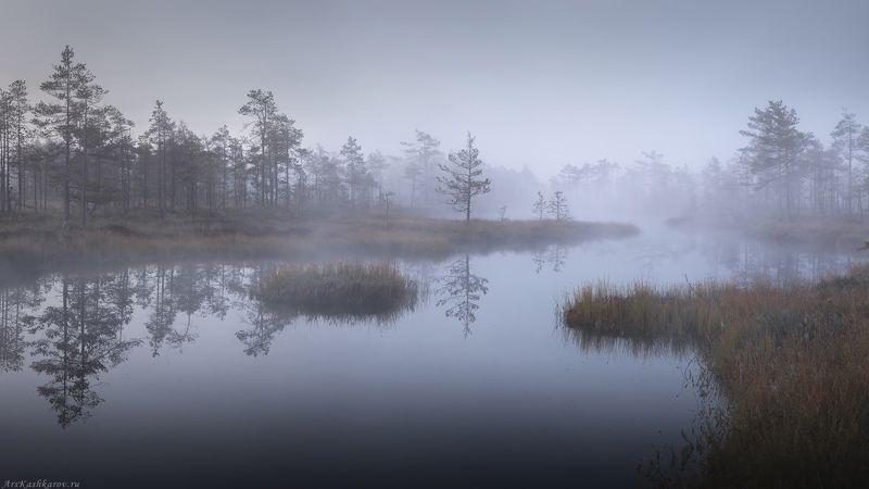 болото, ленобласть, фототур, туман, ленинградская область, первый снег \