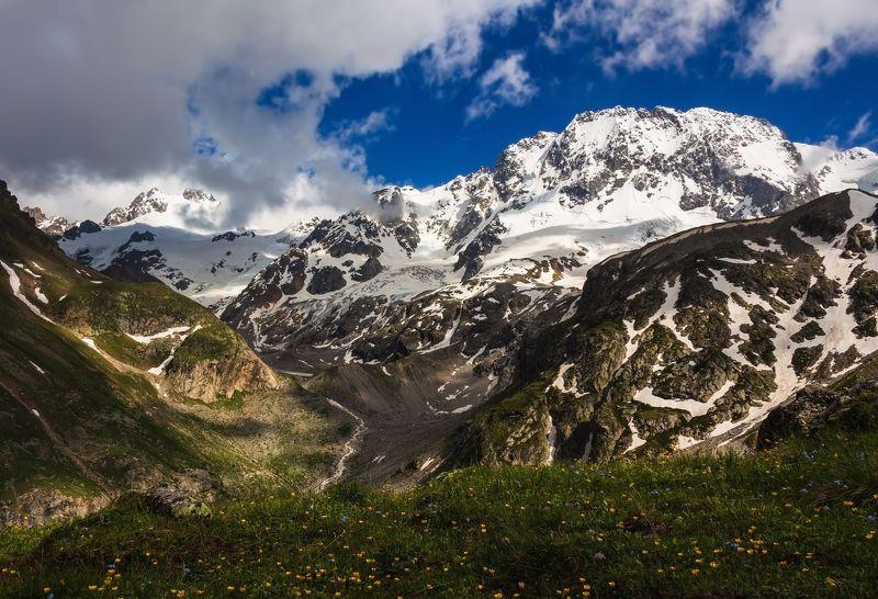 горы,восхождение,кавказ,облака цветы и снежные вершины....photo preview