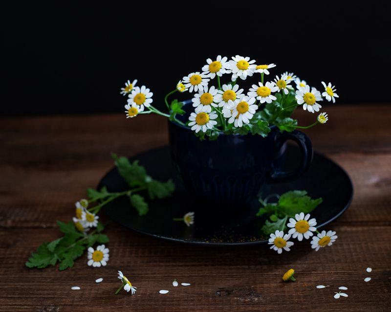 натюрморт, цветы, ромашки Матрикарияphoto preview