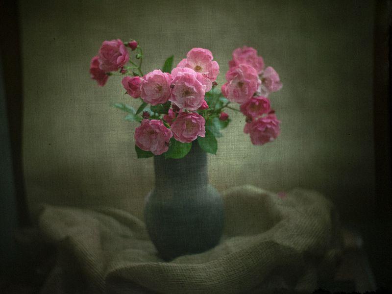 #haruhisa Роз душистых аромат...photo preview