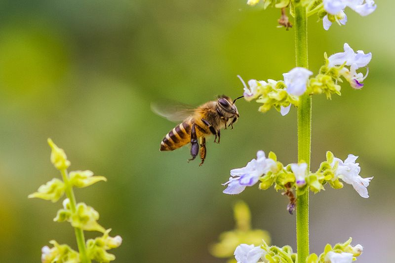 #bee photo preview