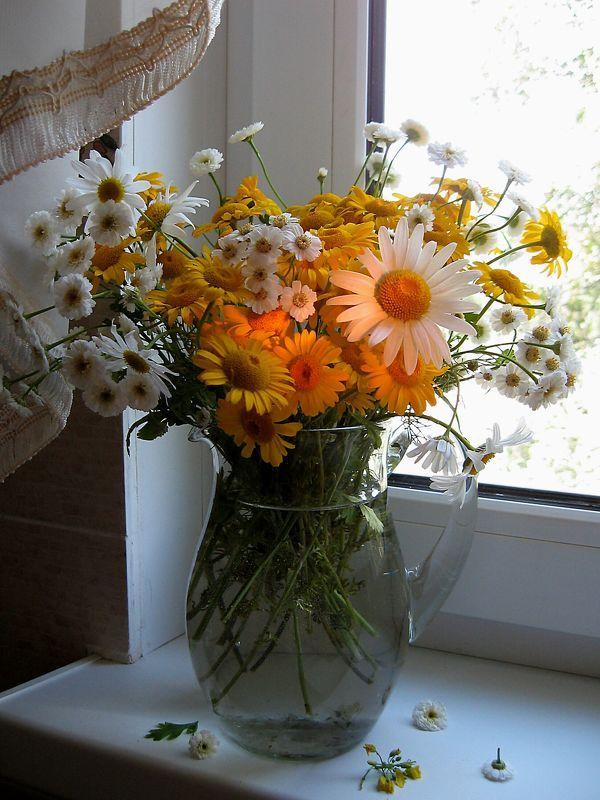 цветы, букет, ромашки, хризантемы Ромашки на окне пятиэтажкиphoto preview