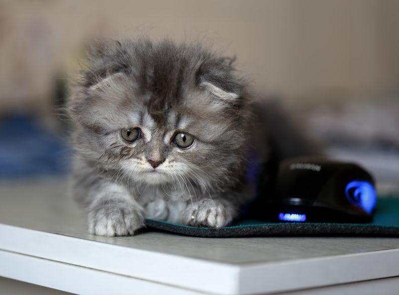 соня, котёнок, мышка с мышкой..photo preview