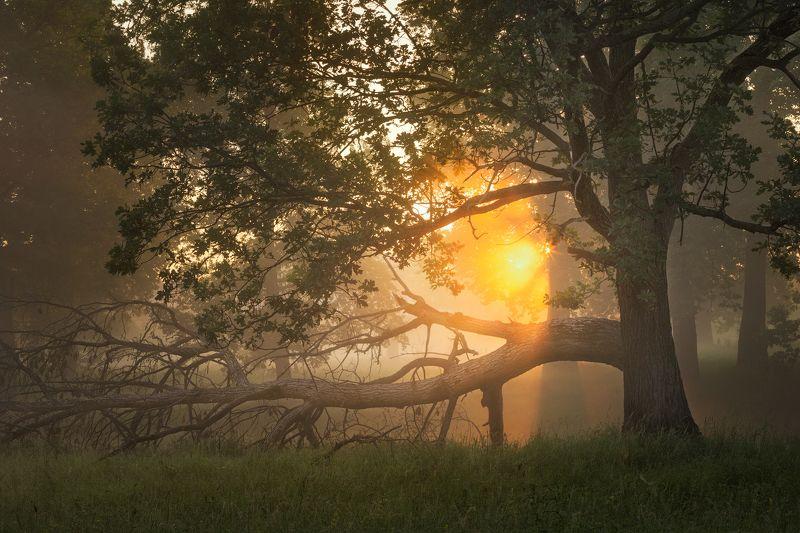 природа утро туман деревья лес солнце лето На рассвете фото превью