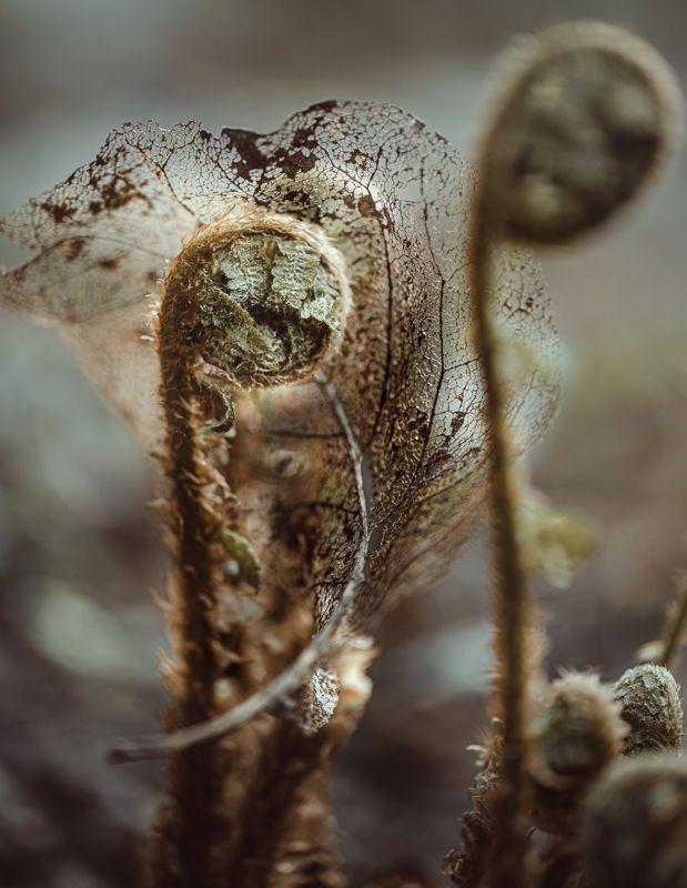 природа, макро, весна, папоротник, лист Старое кружевоphoto preview