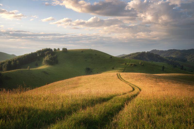 алтайский край, алтайский район, бирюксинский перевал, айские холмы, алтайская тоскана, утро в холмах, холмогорье, степной пейзаж, поле, травы Утро на Бирюксинском перевалеphoto preview