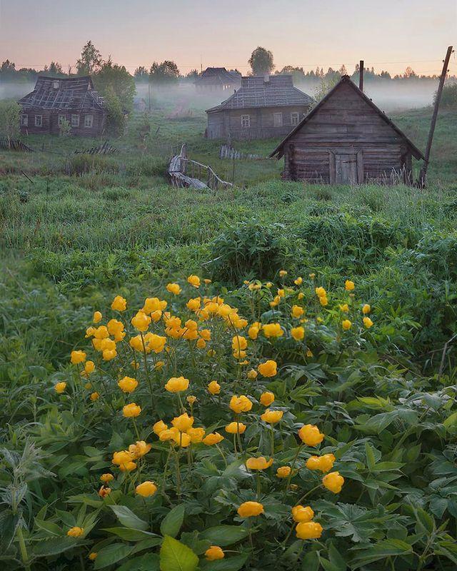 цветы, заброшка Купальницыphoto preview
