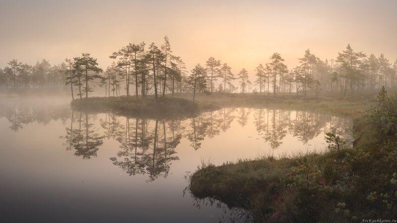 болото, ленобласть, фототур, туман, ленинградская область, заря \