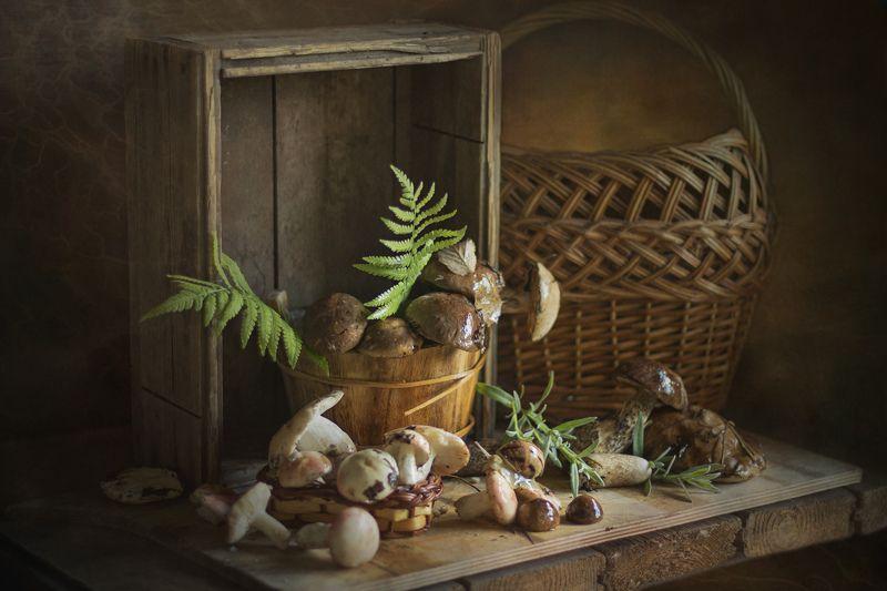 натюрморт, грибы, корзина, лето, лес Июньские подберёзовикиphoto preview