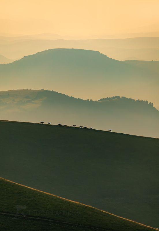 горы, гора, кавказ, лошади, коровы, рассвет, туман, дымка, даль, горизонт, холмистый, лето, табун, северный кавказ, теберда, вершина, путешествие, эльбрус, Горизонтыphoto preview