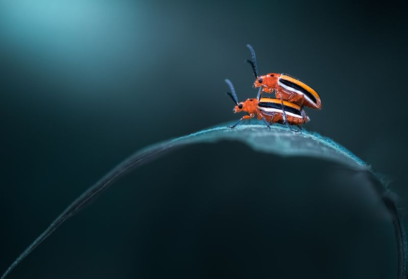 insect, beetle, bug, bugs, leaf, grass, macro, spring, love, Ride of my lifephoto preview