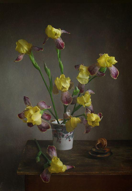 натюрморт, цветы, букет, ирисы, июнь Фотозарисовки с уходящими ирисамиphoto preview