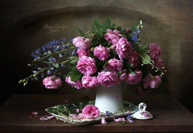 розы, цветы Розы фото превью