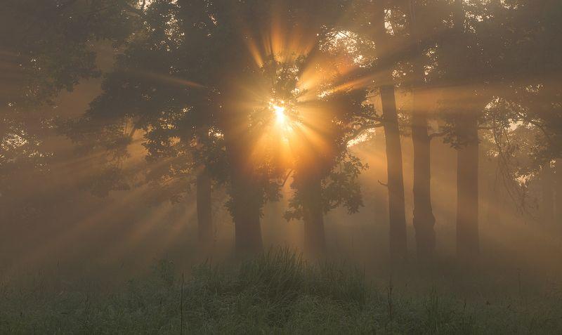 природа утро туман деревья солнце Хранитель рассветов фото превью