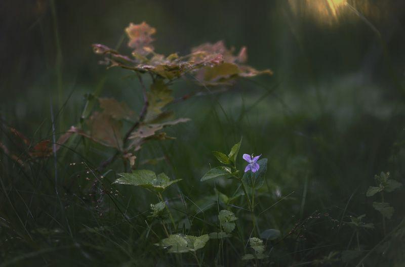 природа, растения, цветы, макро Под покровом лесаphoto preview