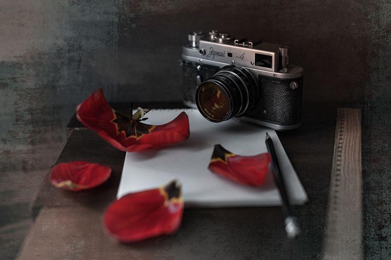 ретро, ретро камера, зоркий, лепестки тюльпана Про ретро с лепесткамиphoto preview