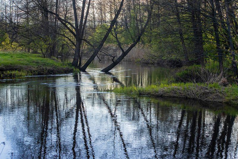 лесная река, весна, молодая зелень, ольха, осина, мещёра, рязанская область Pro майские лесные рекиphoto preview