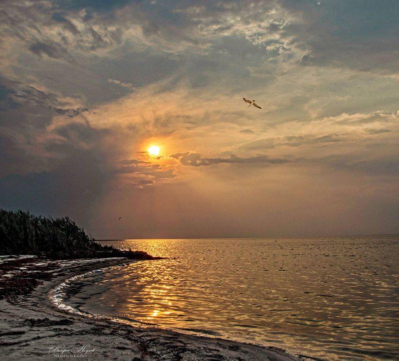 азов, закат, вечер, июнь, небо, облака, чайка К солнцуphoto preview