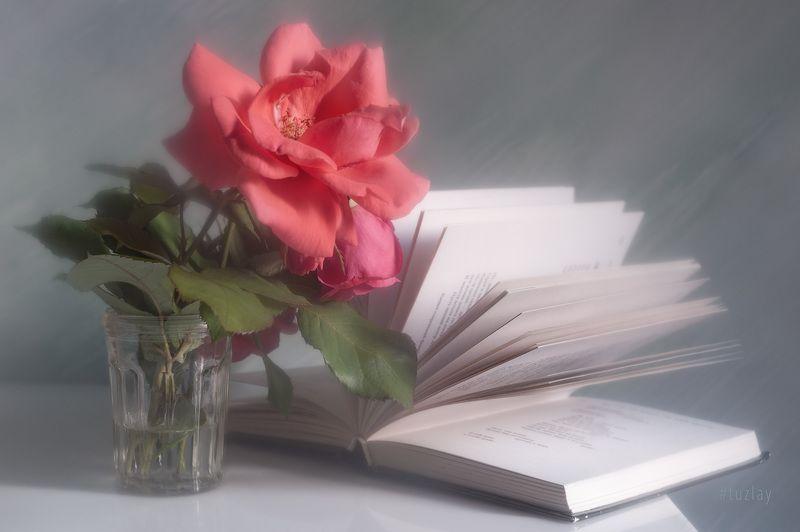 розы, книги, книга Продолжая книжно-розочную тему...photo preview