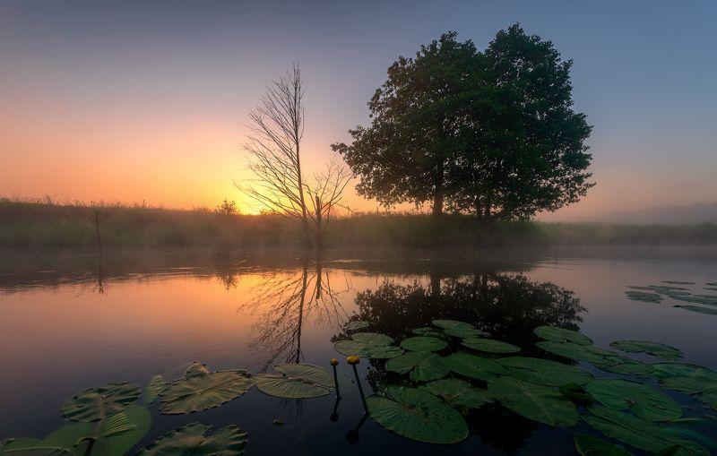 утро, река, рассвет, туман Утренняяphoto preview