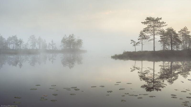 болото, ленобласть, фототур, туман, ленинградская область, минимализм, сумерки \