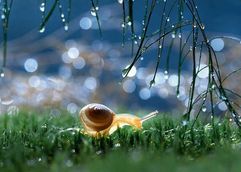 макро, макрофото, улитка, гриб, дождь, лес, природа, капли, никон, сигма, гелиос, macro, macro, snail, mushroom, rain, forest, nature, drops, nikon, sigma, sigma105, Glowphoto preview