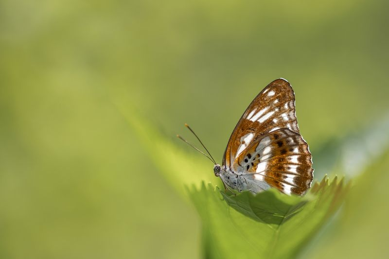 #butterfly #macro #nature Butterflyphoto preview