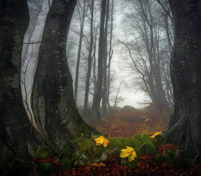 landscape nature scenery forest wood autumn mist misty fog foggy colors mountain vitosha bulgaria туман лес The windowphoto preview