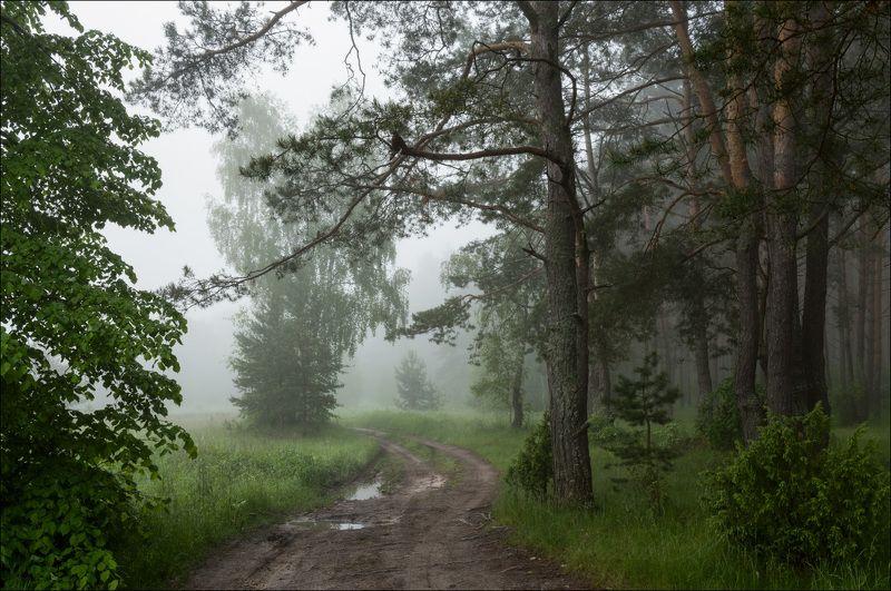 Утро в сосновом лесу с ландышамиphoto preview