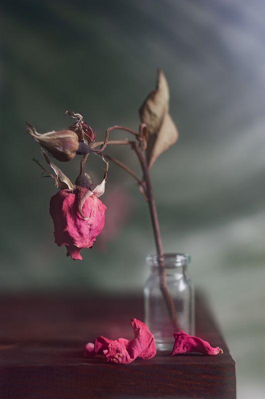 сухая роза, блюр эффект, гелиос 44 Волшебство искажения продолжается!photo preview