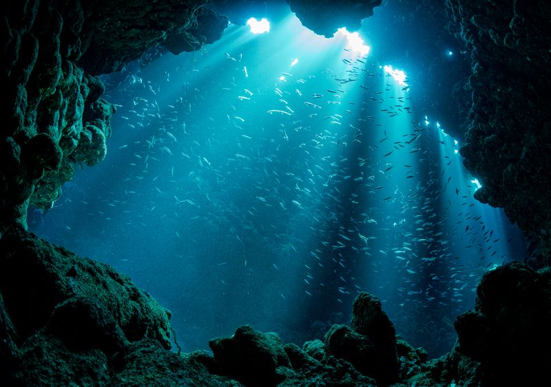 underwater, cavern, cave, diving, underwater photography, landscape, mystic, water, fish, rock Shellphoto preview