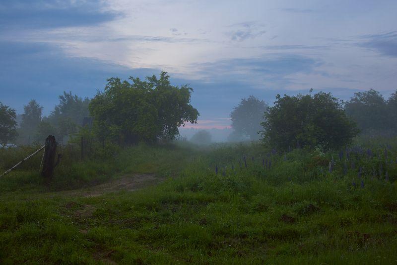 вечер июнь серково околица туман Вечерний туманphoto preview
