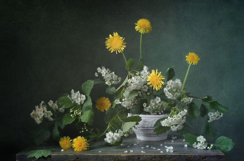 натюрморт, цветы, букет, боярышник, одуванчики, июнь ***photo preview