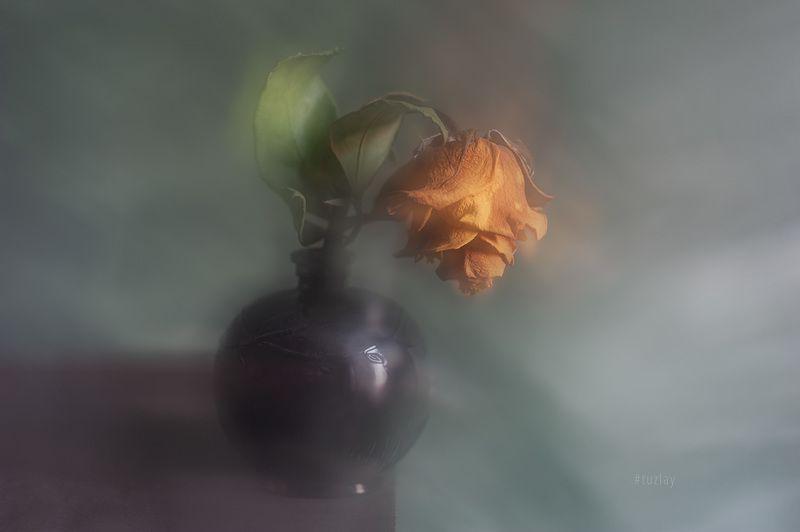 желтая роза, сухая роза, блюр Жёлтая подсушенная в блюреphoto preview