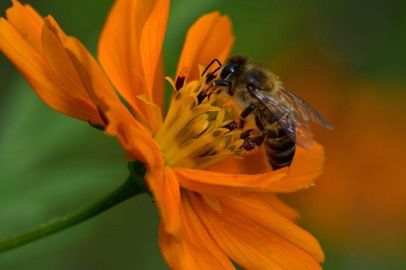 denis moura, mogi das cruzes, brasil, bee Save the beesphoto preview